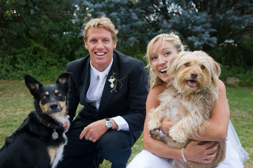 Wedding pics with dogs